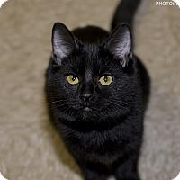Adopt A Pet :: Dancer - Medina, OH