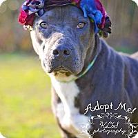 Adopt A Pet :: Socks - Fort Valley, GA