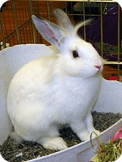 Lionhead Mix for adoption in North Gower, Ontario - Tonya