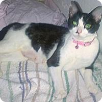Adopt A Pet :: Bessie - Columbus, GA