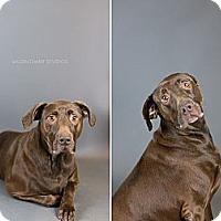 Adopt A Pet :: Coco - Muskegon, MI