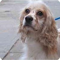 Adopt A Pet :: Gizmo - Long Beach, NY