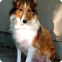 Adopt A Pet :: Roxie - Mission, KS