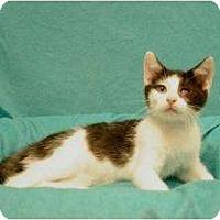Adopt A Pet :: T-Bone - Sacramento, CA
