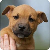 Adopt A Pet :: Mowry - Providence, RI