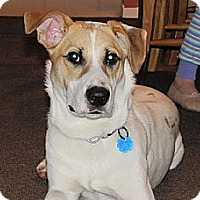 Adopt A Pet :: Tieryon - Hamilton, ON