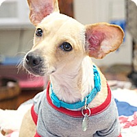 Adopt A Pet :: Dougie - Homewood, AL
