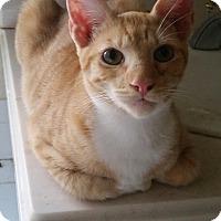 Adopt A Pet :: Baby - Temecula, CA