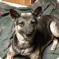 Adopt A Pet :: Asha - Morrisville, NC