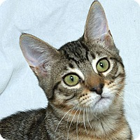 Adopt A Pet :: Sally V - Sacramento, CA