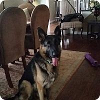 Adopt A Pet :: Zane - Burlington, NJ