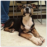 Adopt A Pet :: Cagney - Holly Springs, NC