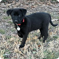 Adopt A Pet :: Sierra - Little Rock, AR