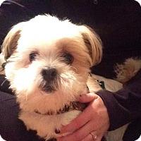 Adopt A Pet :: PAIGE-pending - Eden Prairie, MN