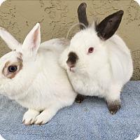 Adopt A Pet :: Alice & Flo - Bonita, CA