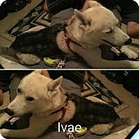 Adopt A Pet :: Ivae - Sacramento, CA