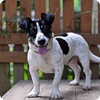 Adopt A Pet :: Pluto - Baton Rouge, LA