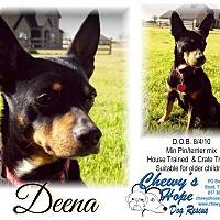 Adopt A Pet :: Deena - Boyd, TX