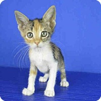 Adopt A Pet :: A025575 - Norman, OK