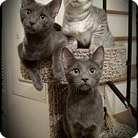 Adopt A Pet :: Hushpuppy - Richmond, VA