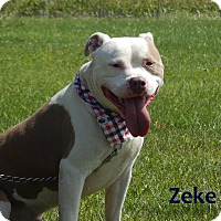 Adopt A Pet :: Zeke - Bucyrus, OH