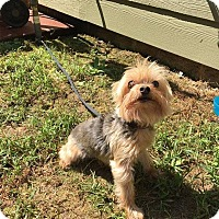 Adopt A Pet :: Cooper - Waxhaw, NC