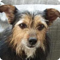 Adopt A Pet :: Brutus - Lexington, KY