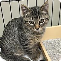 Adopt A Pet :: Carlton - Menands, NY