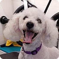Adopt A Pet :: Murphy - Placentia, CA