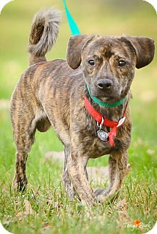 Dachshund Mix Dog for adoption in Princeton, Minnesota - Pepper