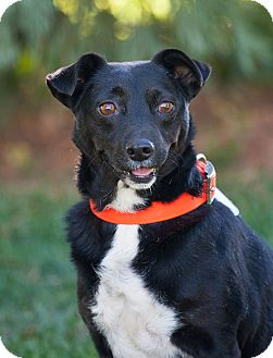 Terrier (Unknown Type, Small)/Dachshund Mix Dog for adoption in Washoe Valley, Nevada - Kess