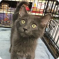 Adopt A Pet :: Jaiden - Gilbert, AZ