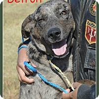Adopt A Pet :: Detroit- Coming 12/9 - Elburn, IL