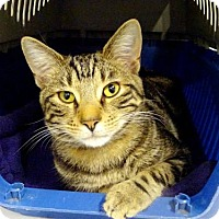 Adopt A Pet :: Calvin - Belleville, MI