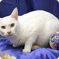 Adopt A Pet :: Jennifer Jareau - Chattanooga, TN