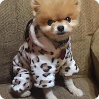 Adopt A Pet :: Twister - Dallas, TX