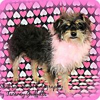 Adopt A Pet :: Bella - Lodi, CA