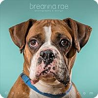 Adopt A Pet :: Bullet - Sheboygan, WI