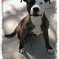 Adopt A Pet :: FLETCHER - Encino, CA