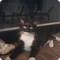 Adopt A Pet :: Skyler - Monroe, GA