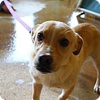 Adopt A Pet :: Lance - Linden, TN