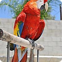 Adopt A Pet :: Rio - Redlands, CA