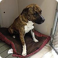 Adopt A Pet :: Brendan - Lancaster, VA