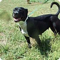 Adopt A Pet :: Sundae - Albany, NY