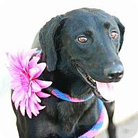 Adopt A Pet :: Dee Dee - Canoga Park, CA