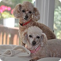 Adopt A Pet :: MOLLY and PUMPKIN - Elk River, MN