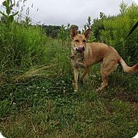 Adopt A Pet :: Liza (fostered in Maine) - Cranston, RI