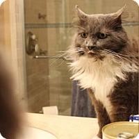 Adopt A Pet :: Hollywood - Merrifield, VA