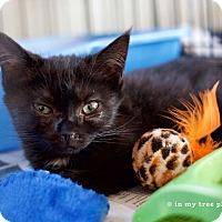 Adopt A Pet :: Be Bop - Island Park, NY