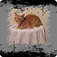 Adopt A Pet :: Mario - Hampton, VA